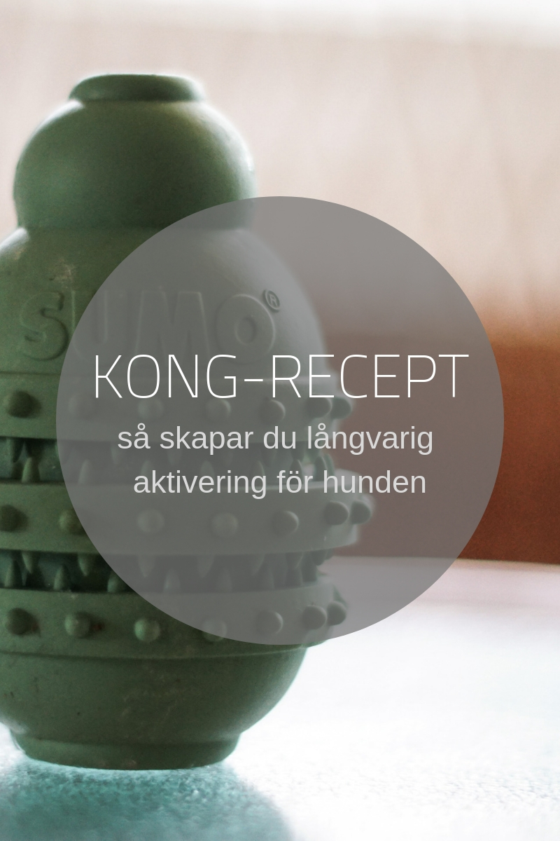 kong recept aktivering hund